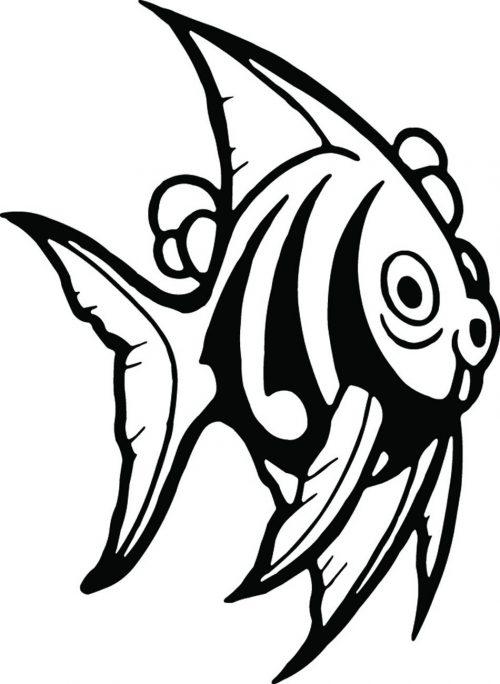 FISH-117