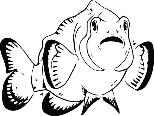 FISH-126