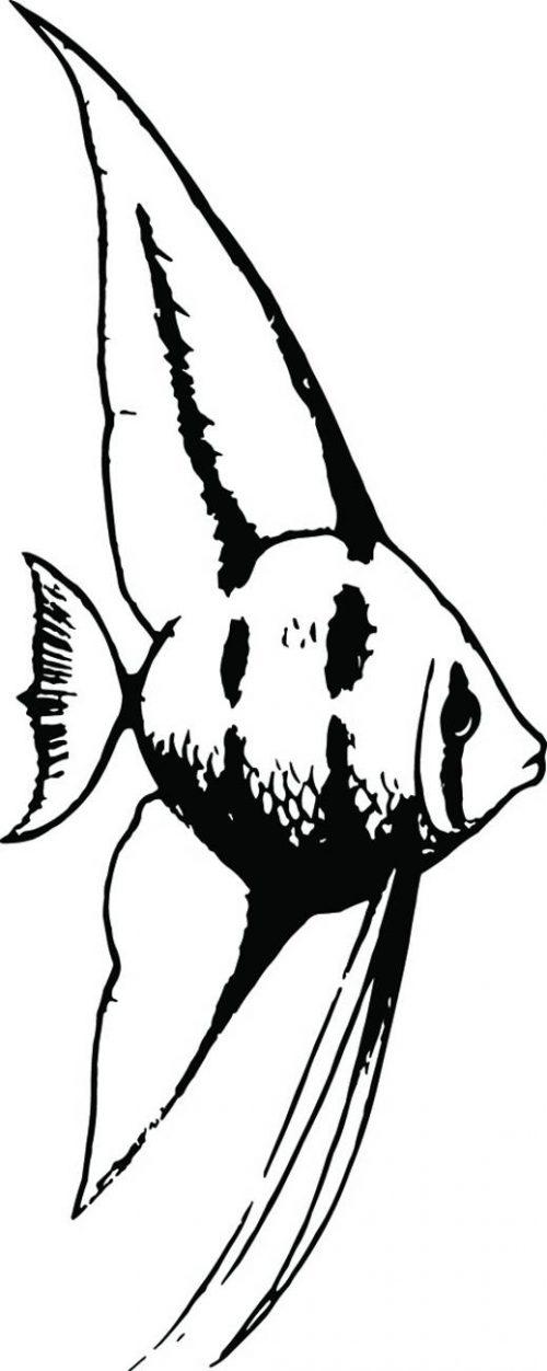 FISH-130