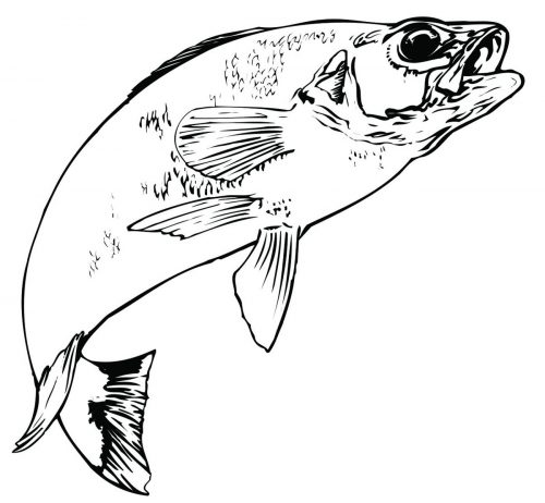 FISH-140