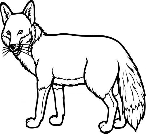 FOX-003