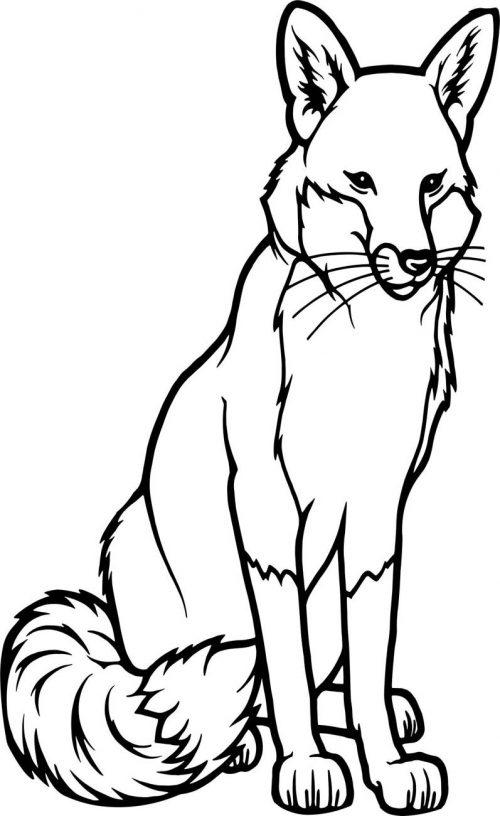 FOX-004