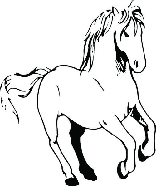 HORSE-107