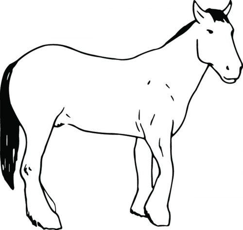 HORSE-112