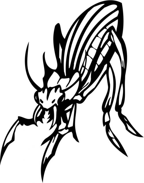 INSECT-119