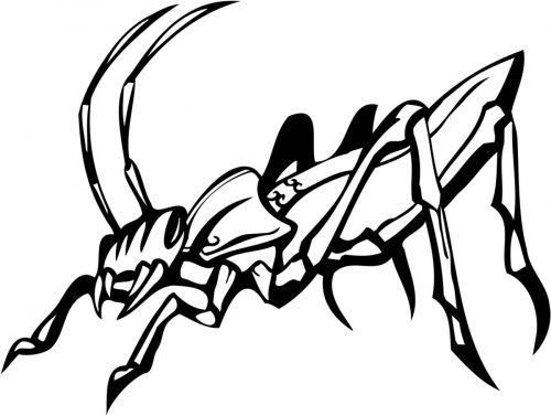 INSECT-126