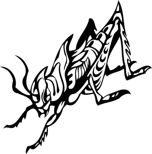INSECT-142