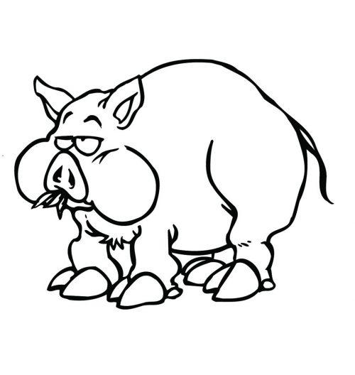 PIG-017