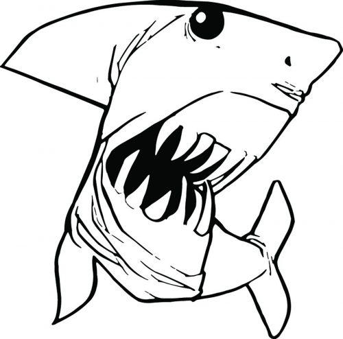 SHARK-053