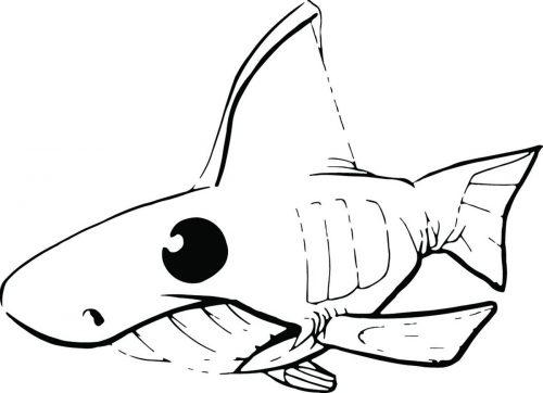 SHARK-054