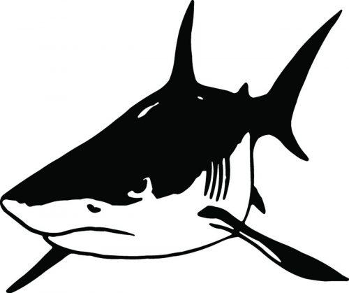 SHARK-056