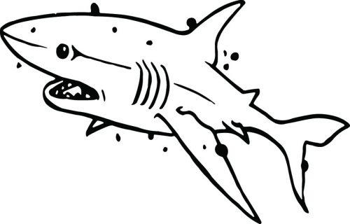SHARK-058