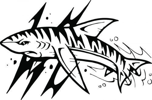 SHARK-061