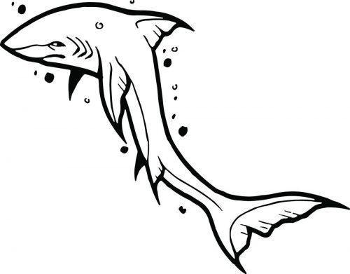 SHARK-062