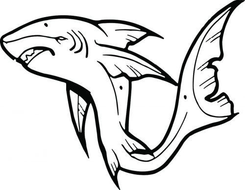 SHARK-064
