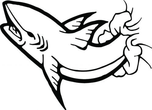 SHARK-065