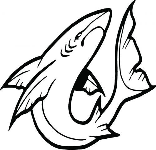 SHARK-066