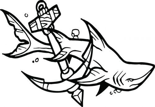 SHARK-068