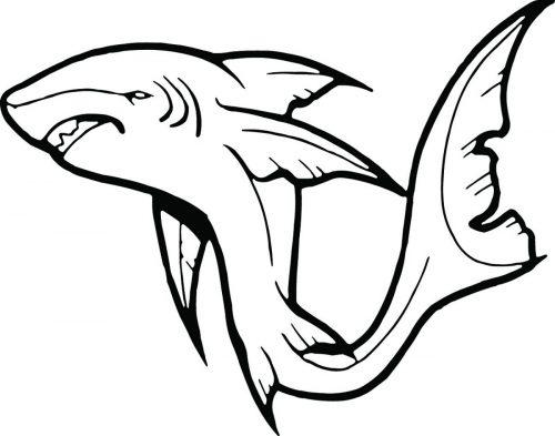 SHARK-075
