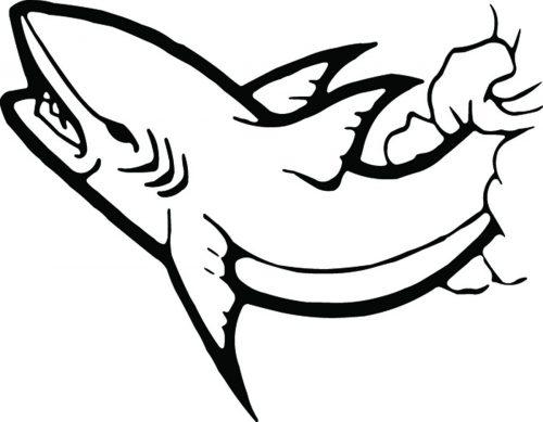 SHARK-077