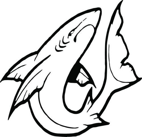 SHARK-078