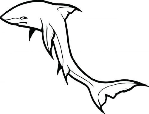 SHARK-079