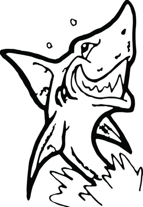 SHARK-082