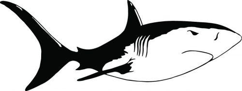 SHARK-083