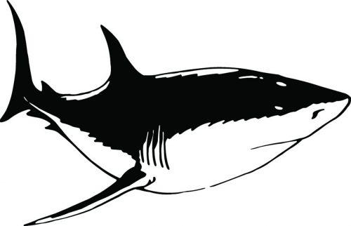 SHARK-085