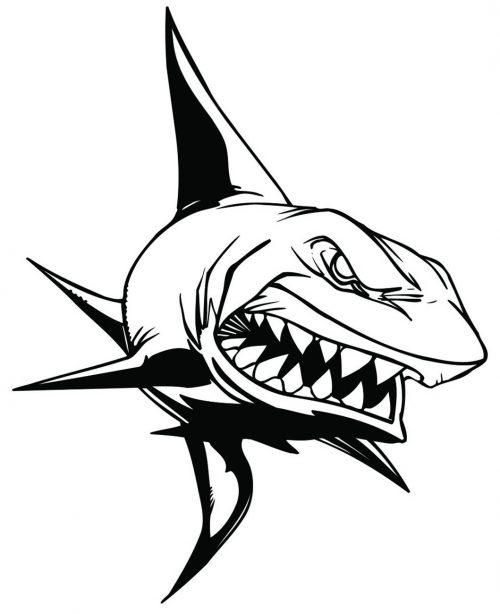 SHARK-091
