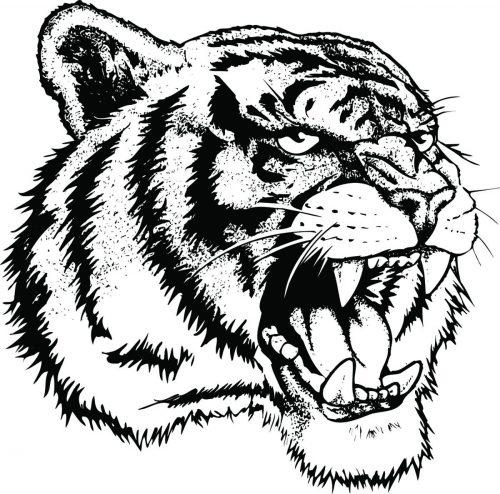 TIGER-038