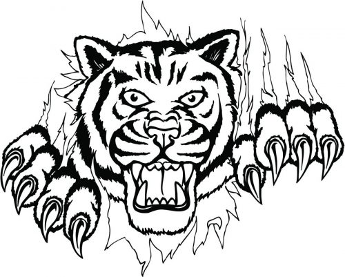 TIGER-051