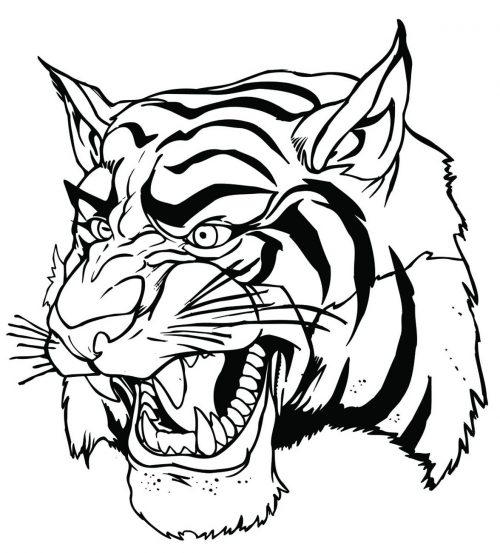 TIGER-059