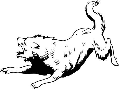 WOLF-007