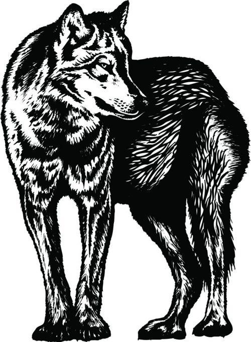 WOLF-022