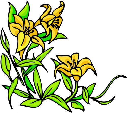 FLOWERS-COLOR-228