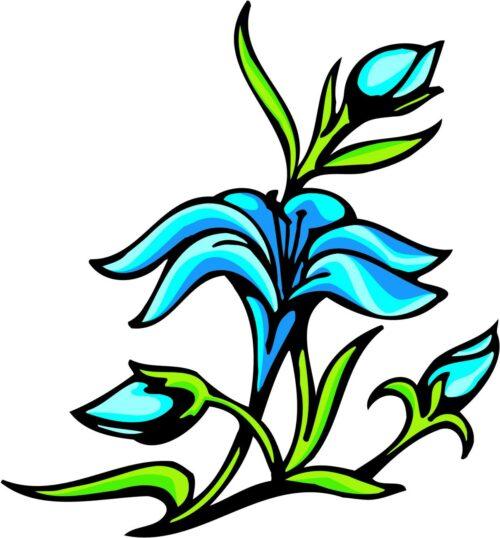 FLOWERS-COLOR-239
