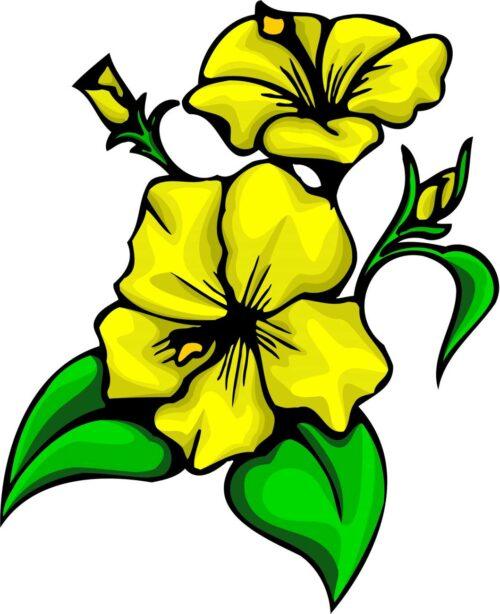 FLOWERS-COLOR-245