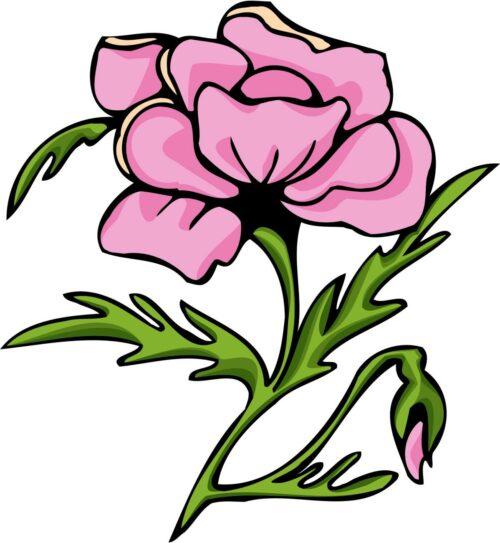 FLOWERS-COLOR-247