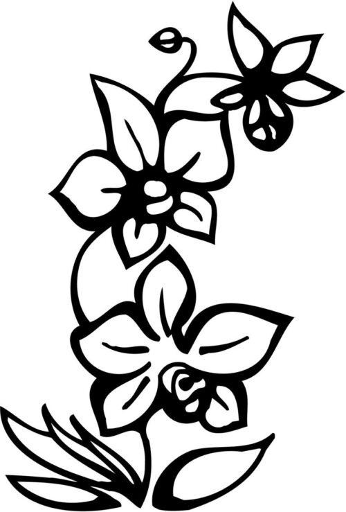FLOWERS-520
